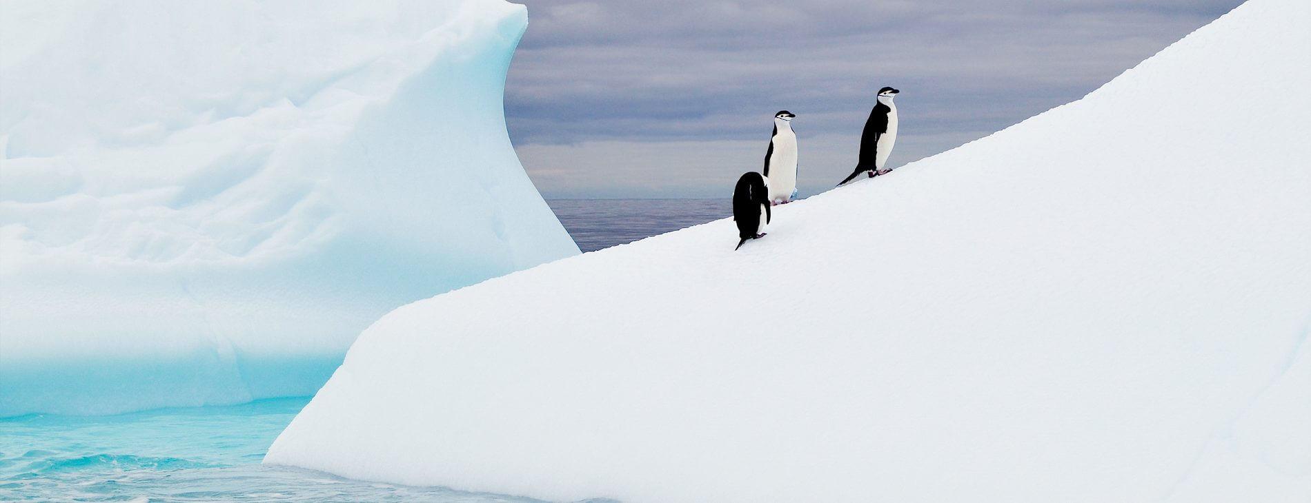 Mastroviaggiatore Antarctica iceberg
