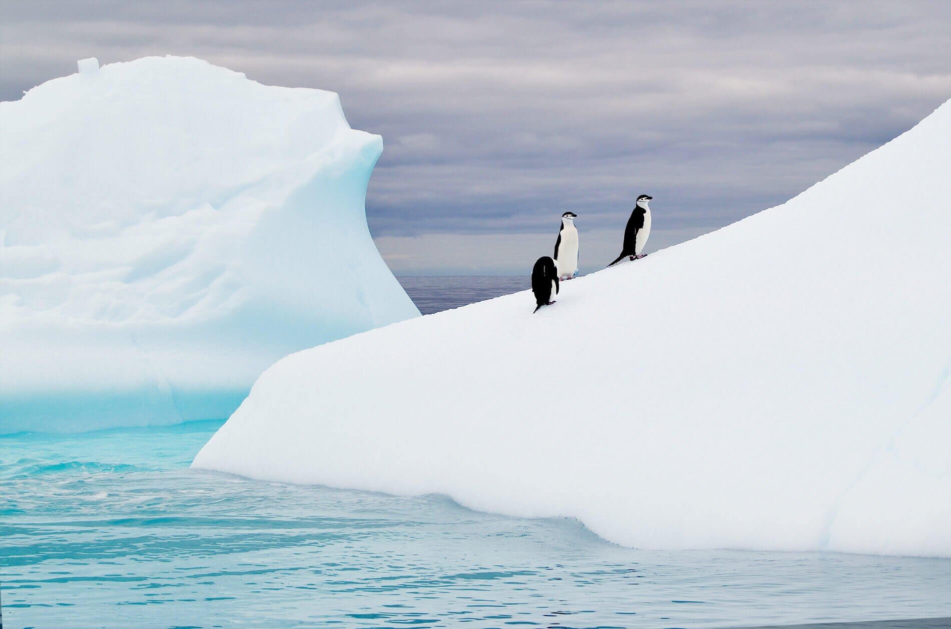 Mastro Patagonico – Slide Home promo Antartide