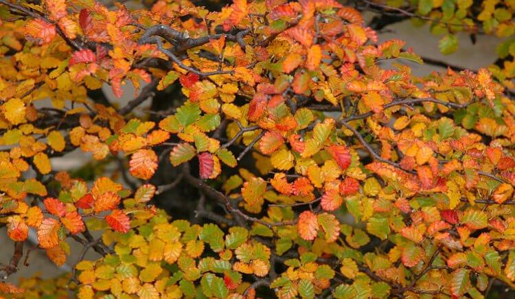 mastroviaggiatore-patagonia-autunno-foglie