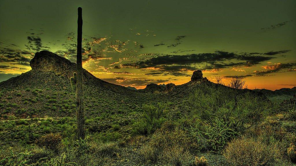 Mastroviaggiatore-baja-california-deserto-cactus