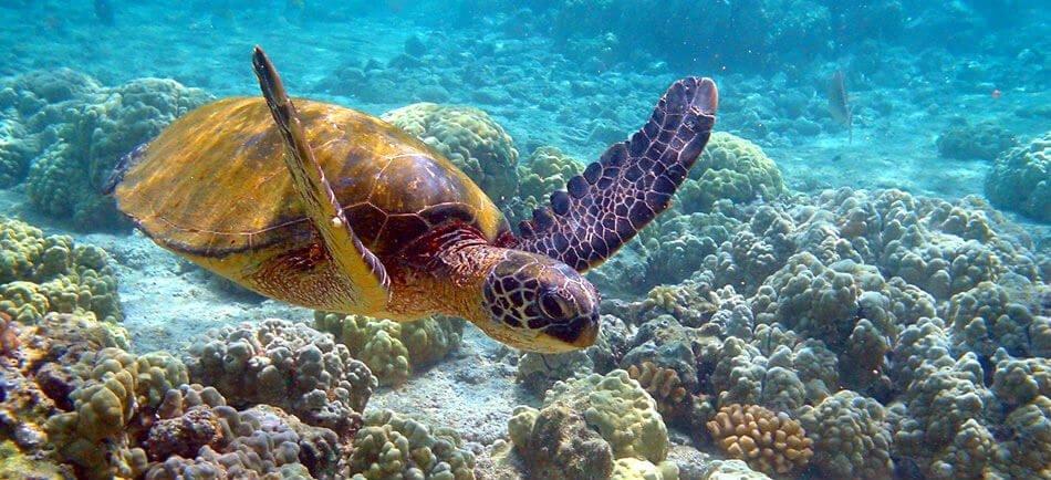 Mastroviaggiatore-baja-california-tartaruga