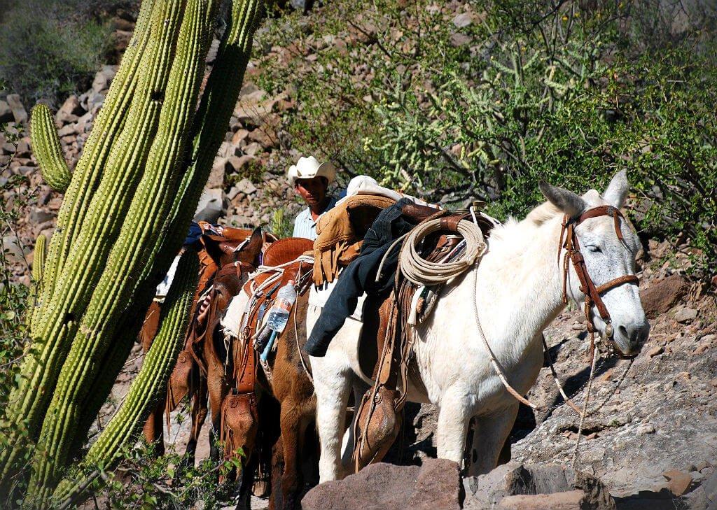Mastroviaggiatore - Baja-California Trek