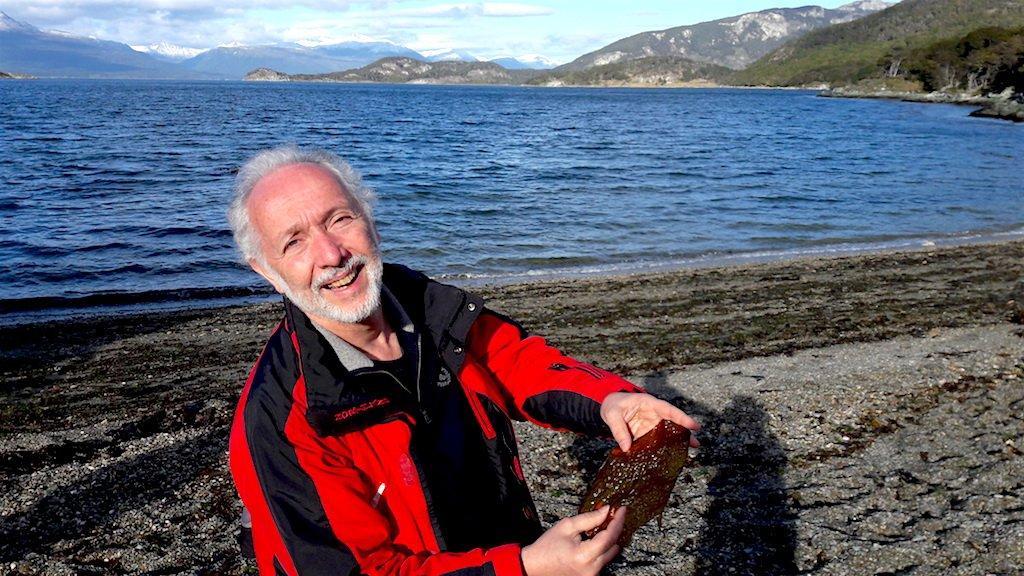 Mastropatagonico-terra-del-fuoco-tipica-alga-atlantica