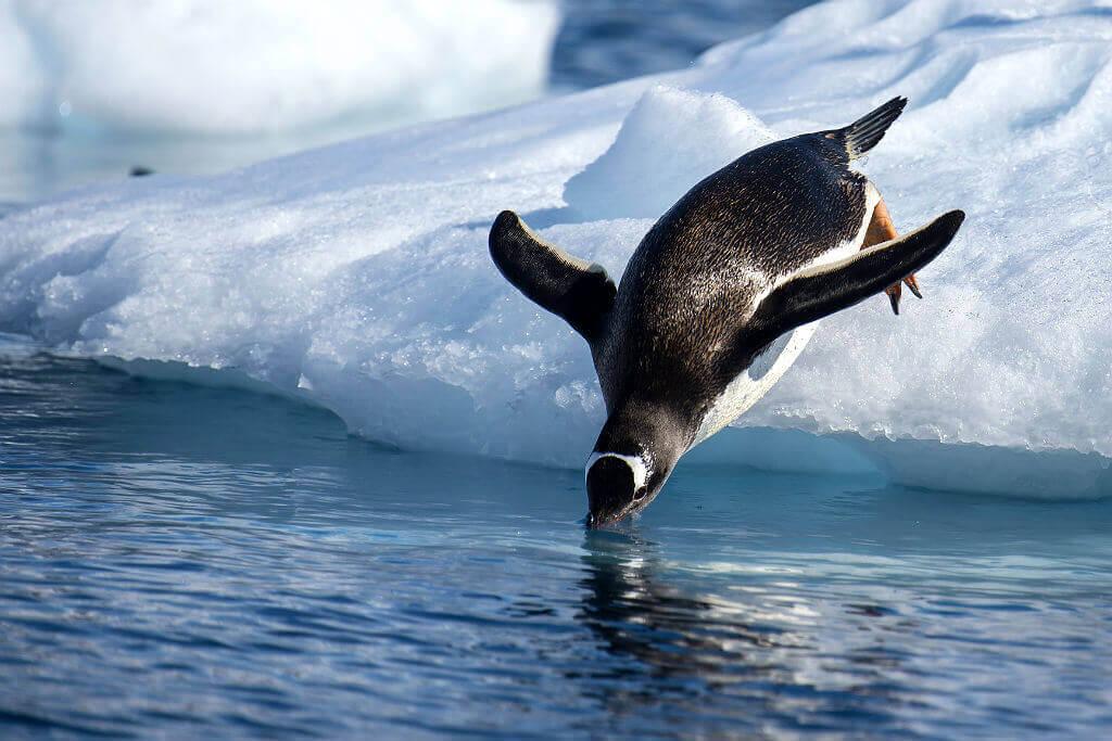 Mastroviaggiatore-Antartide-classico-Penguin-Jump