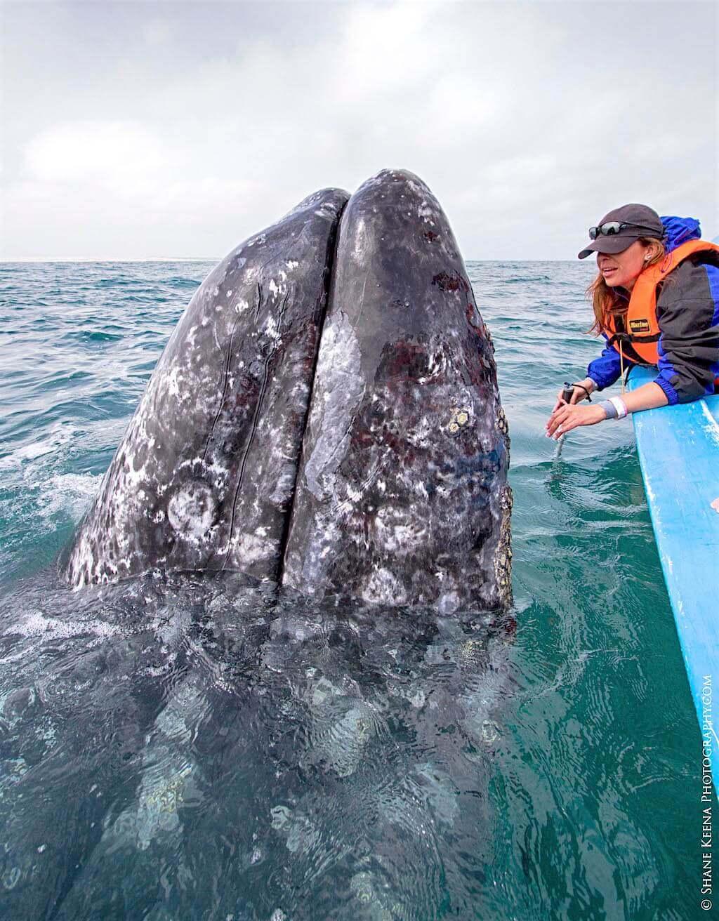 Mastroviaggiatore-Messico-BajaCalifornia-balena-2