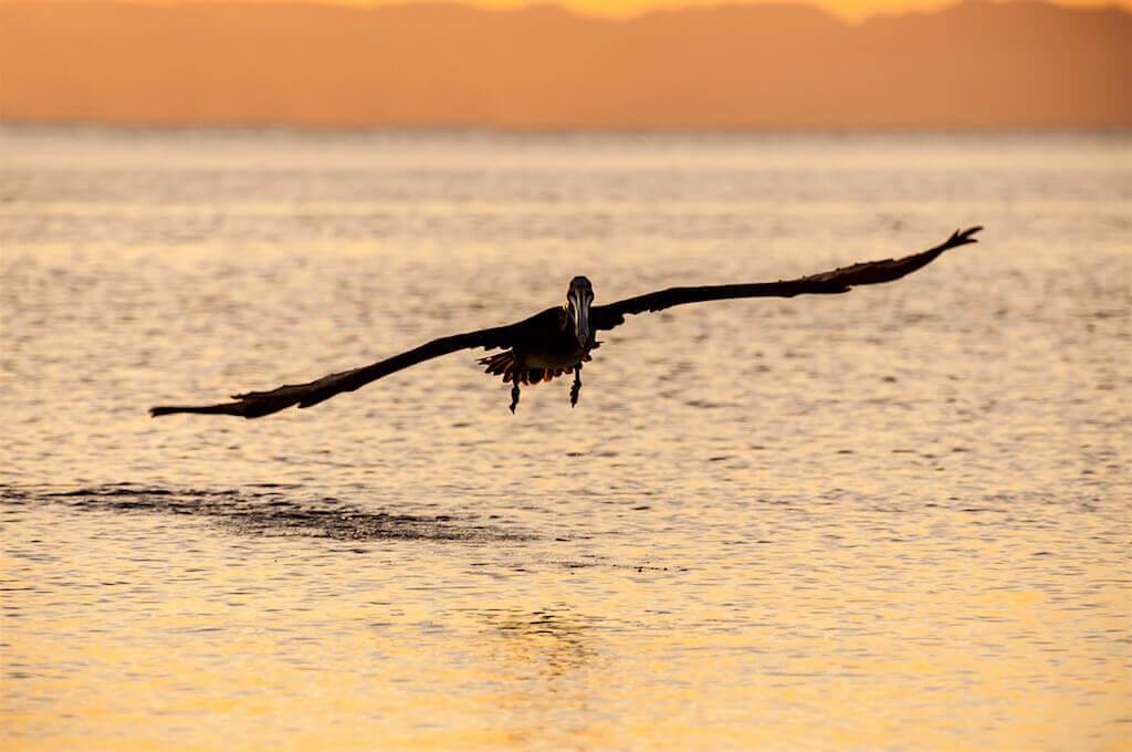 Mastroviaggiatore-baja-california-bird