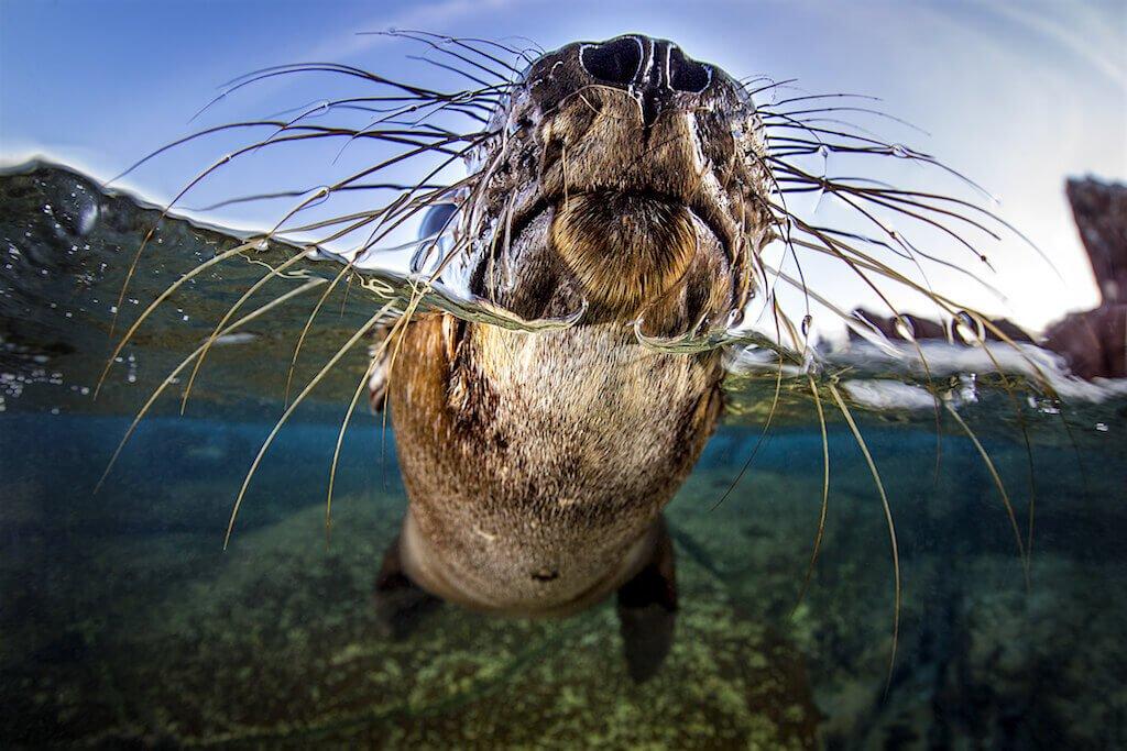 Mastroviaggiatore-baja-california-leone-marino