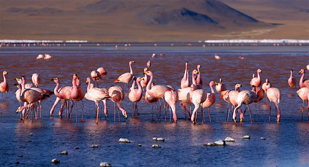 Mastroviaggiatore-bolivia-laguna-colorada-fenicotteri
