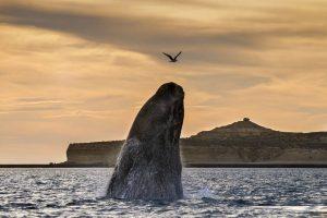 Mastroviaggiatore-PatagoniaInvernoAustrale-balena