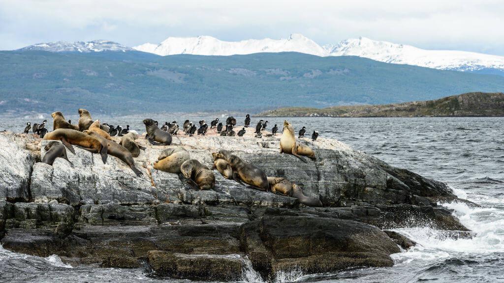 Mastroviaggiatore-PatagoniaInvernoAustrale-ushuaia-leoni-marini-beagle