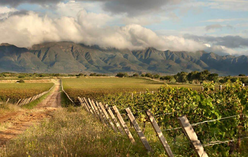 mastroviaggiatore-bolivia-vigne