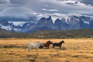 mastroviaggiatore-patagonico-cile-National-Park-Torres-del-Paine-Patagonia