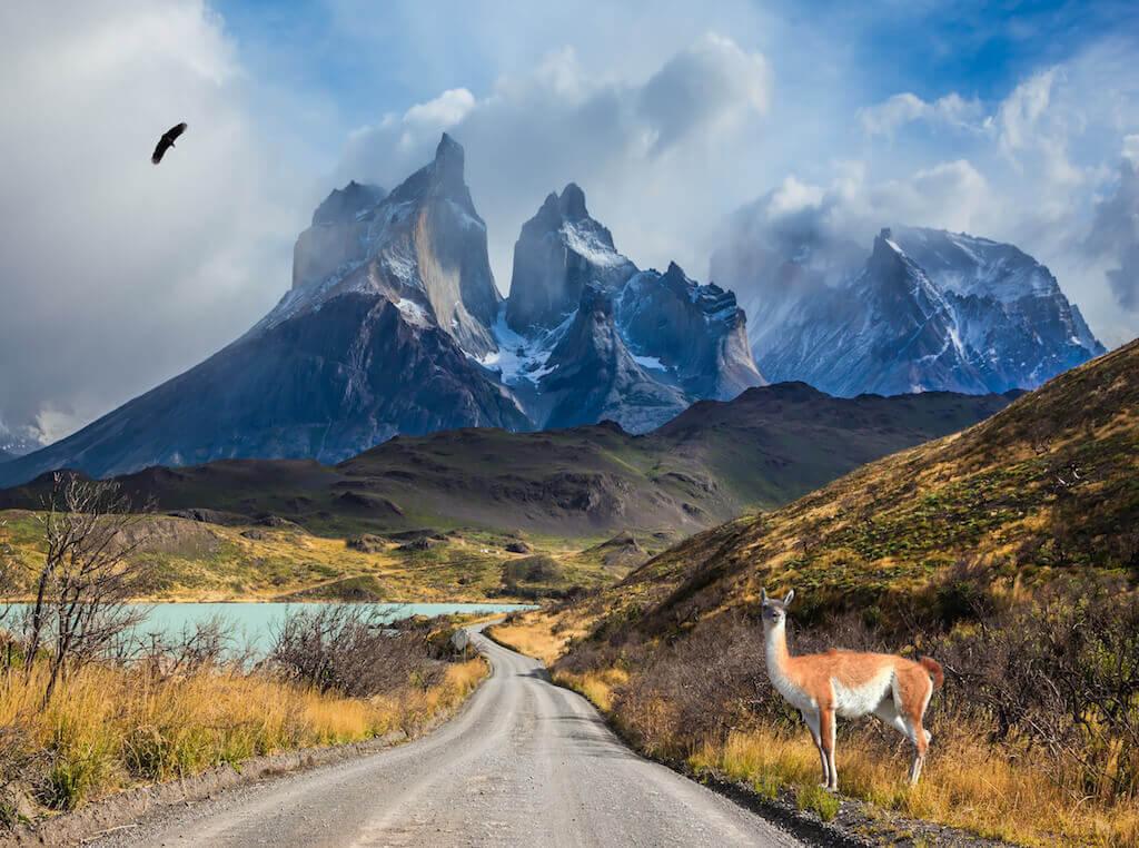 mastroviaggiatore-patagonico-cile-Patagonia-Torres-del-Pain-Guanaco