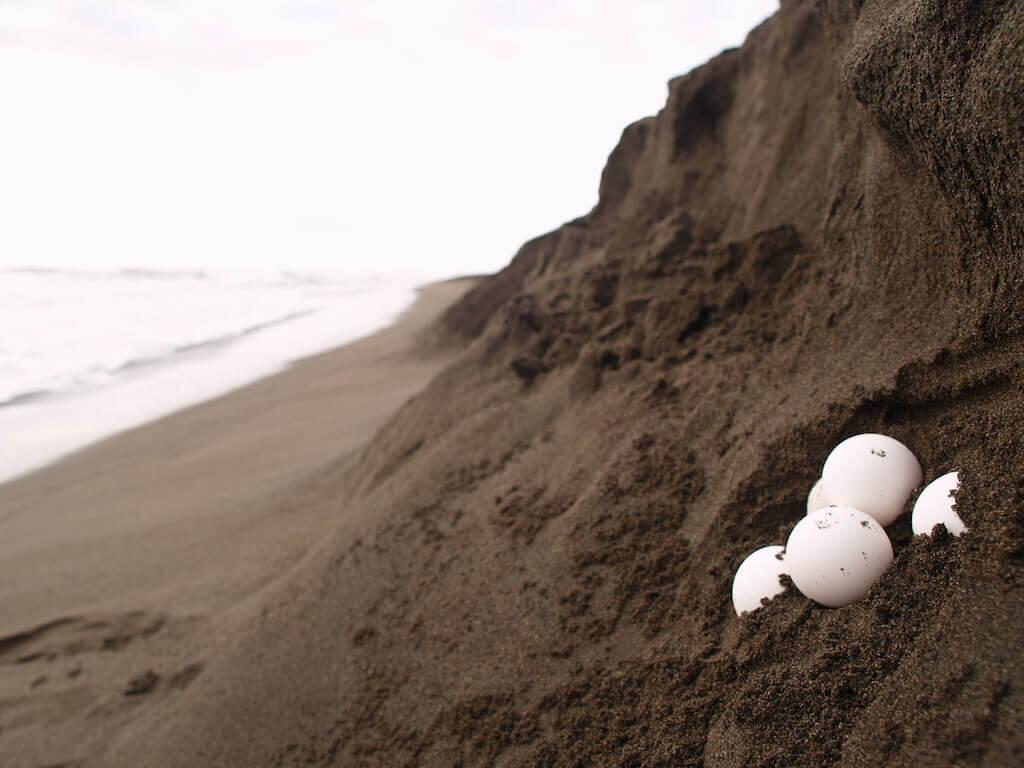 mastroviaggiatore-patagonico-costa-rica-tortuguero