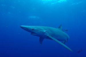 mastrosommerso-casa-della-verdesca-lo-squalo-blu