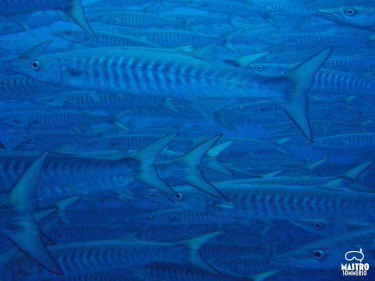 MastroSommerso-il-muro-di-shark-and-yolanda-3