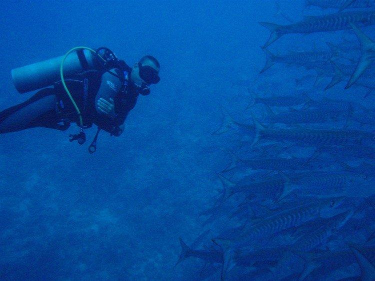 MastroSommerso-il-muro-di-shark-and-yolanda-raf