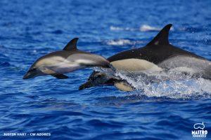 Mastrosommerso-nel-blu-con-i-delfini