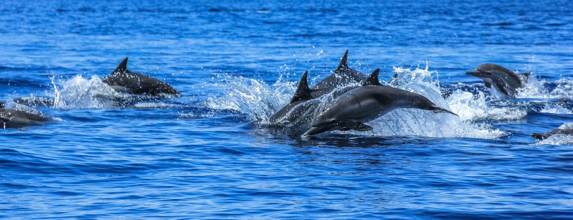 Mastroviaggiatore Baja California Eco camp dolphins