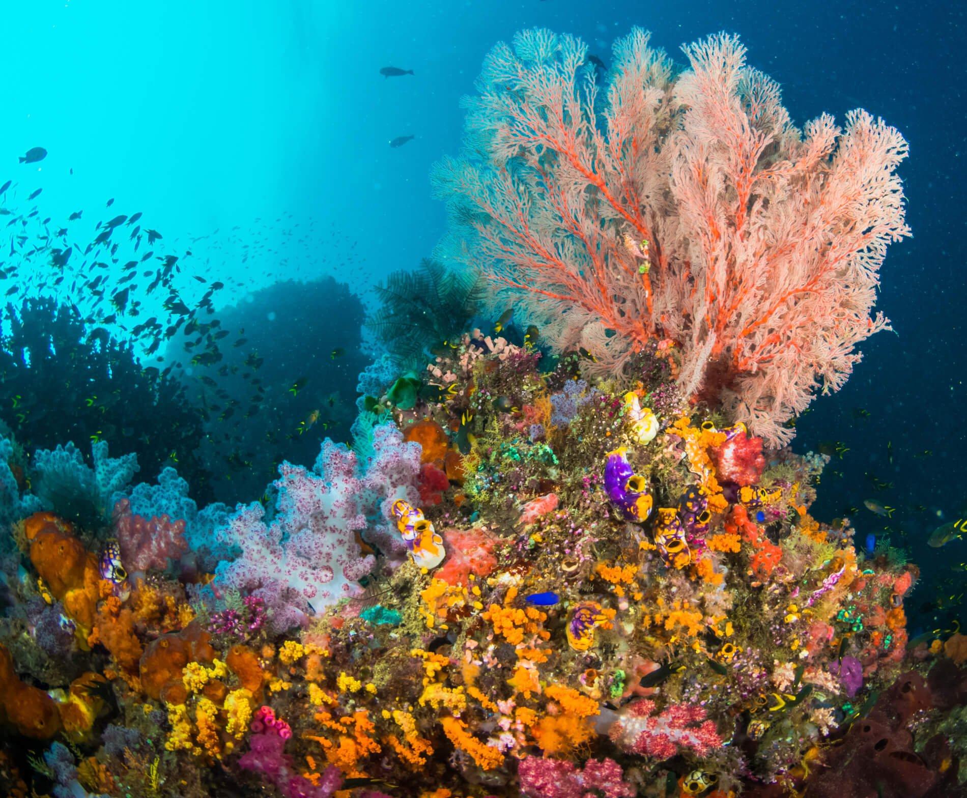 Indonesia diving raja ampat biodiversity eco resort - Raja laut dive resort ...