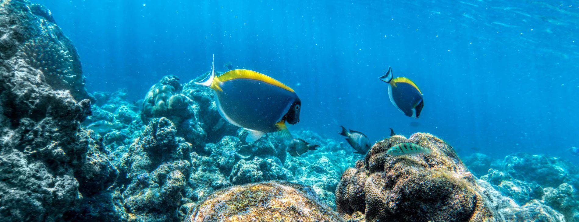 Mastroviaggiatore Maldive Bandos