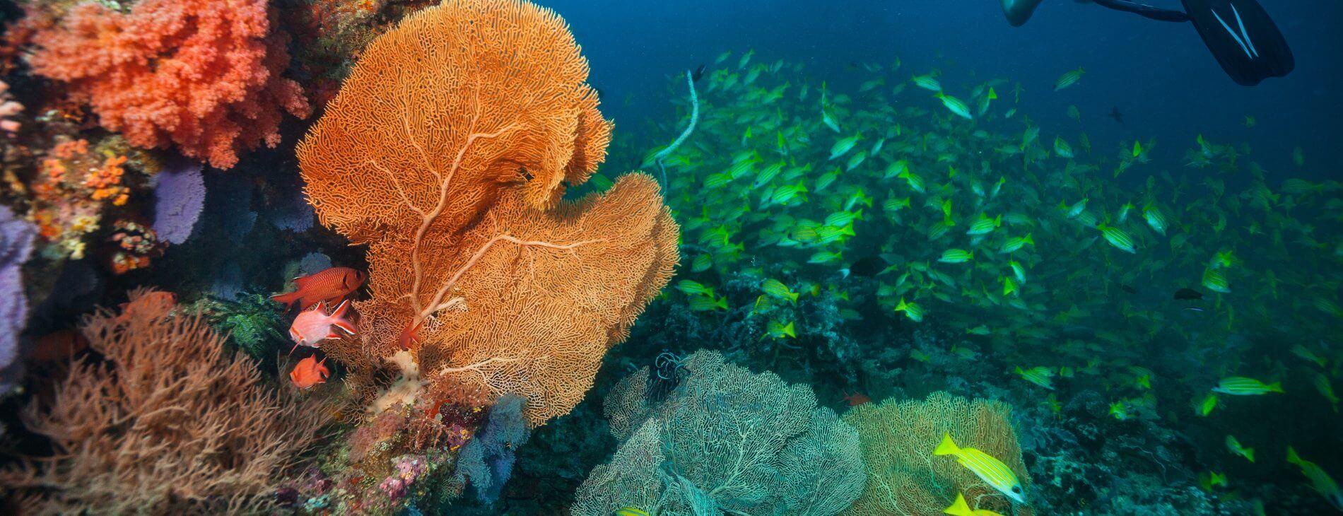 Mastroviaggiatore Maldive Reef