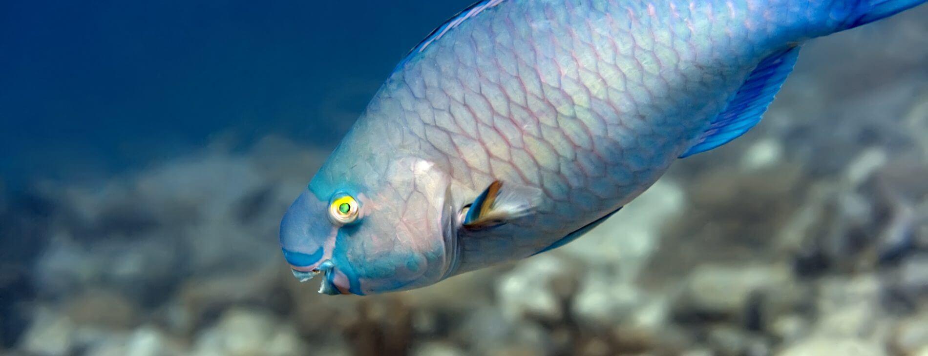Mastroviaggiatore maldive crociera-deep sud-pappagallo