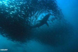 mastro-sommerso-il-grande-party-subacqueo-del-mondo