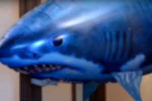 mastrosommerso-garanzia-avvistamento-squali