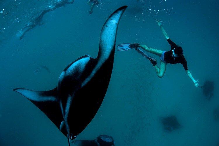 mastrosommerso_maldivesubviaggiatoridoc-manta