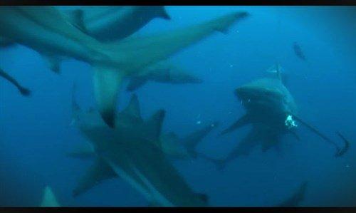 mastroviaggiatore-ho-visto-cose-squali
