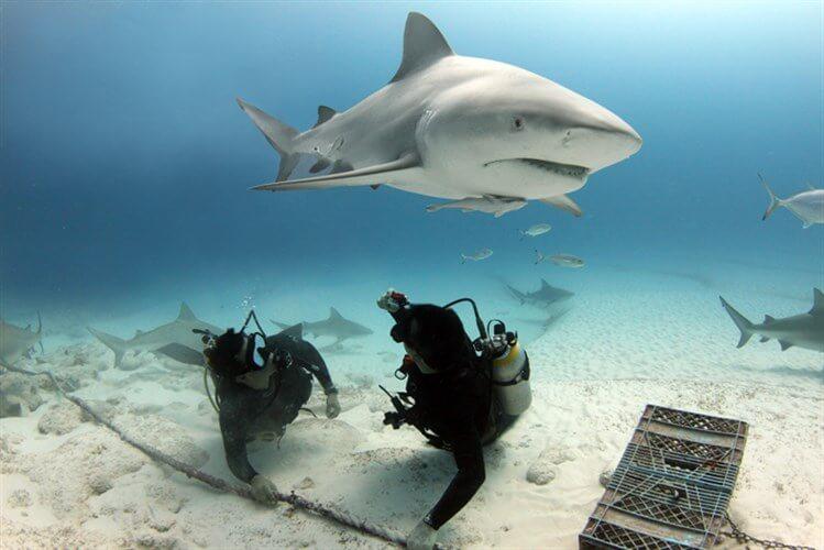 mastroviaggiatore_10curiosita-squalo-zambesi2_749x500