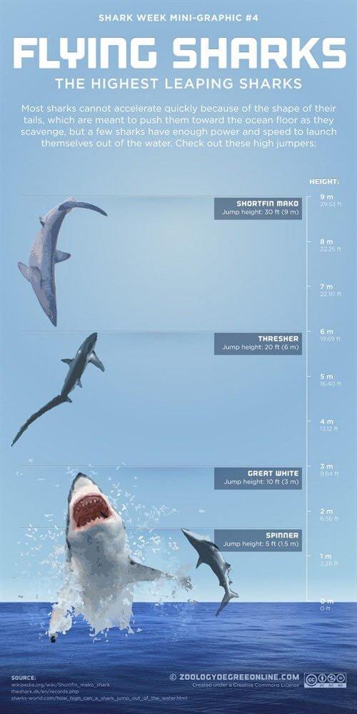 mastroviaggiatore_infografica-shark-3_500x1000