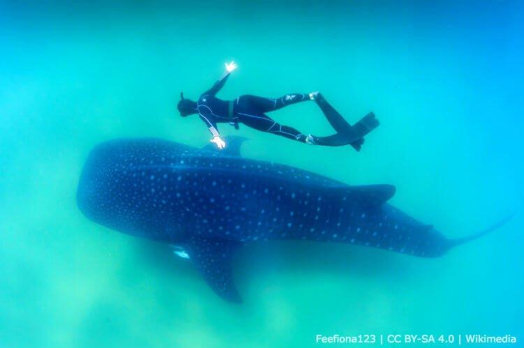 mastroviaggiatore_squali-balena