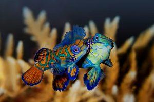 mastroviaggiatore_uomini_e_pesci