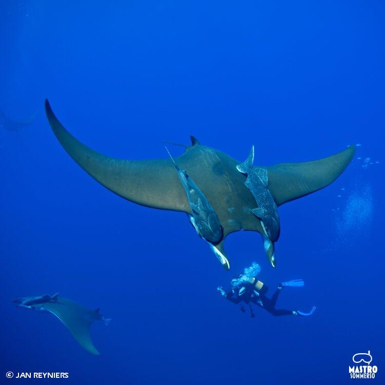 mastroviaggiatore_viaggio-azzorre-paradiso-subacquei
