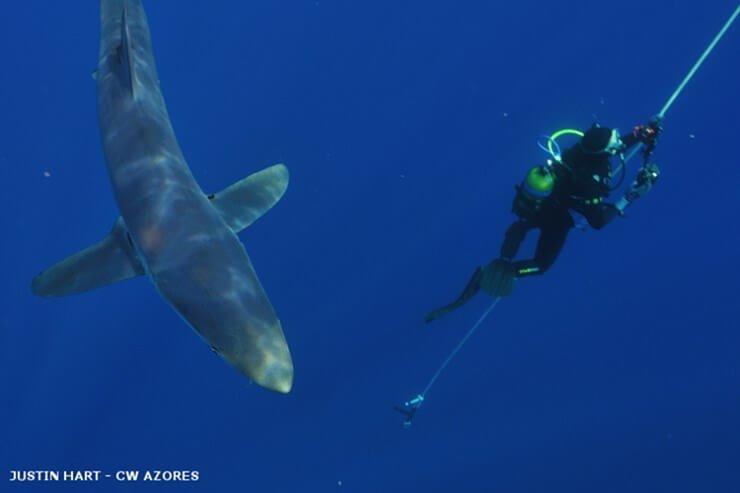 nuotare con le balene pico