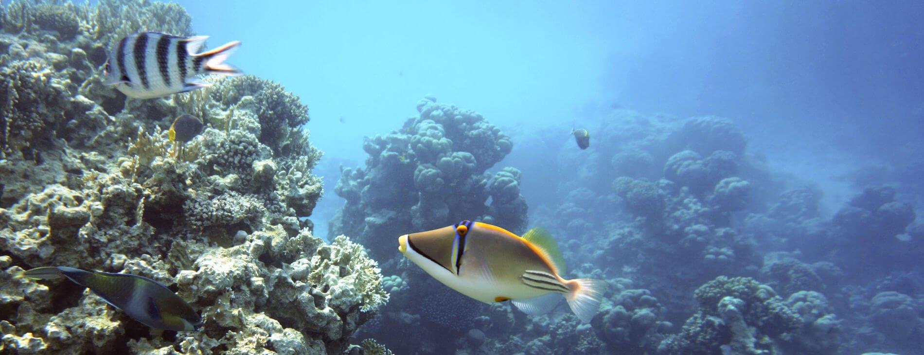 mastroviaggiatore-egitto-picasso_triggerfish
