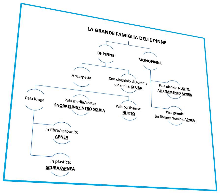 mastrosommerso-grande-famiglia-pinne-2