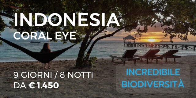INDONESIA – CORAL EYE