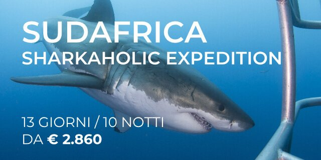SUDAFRICA – SHARKAHOLIC EXPEDITION