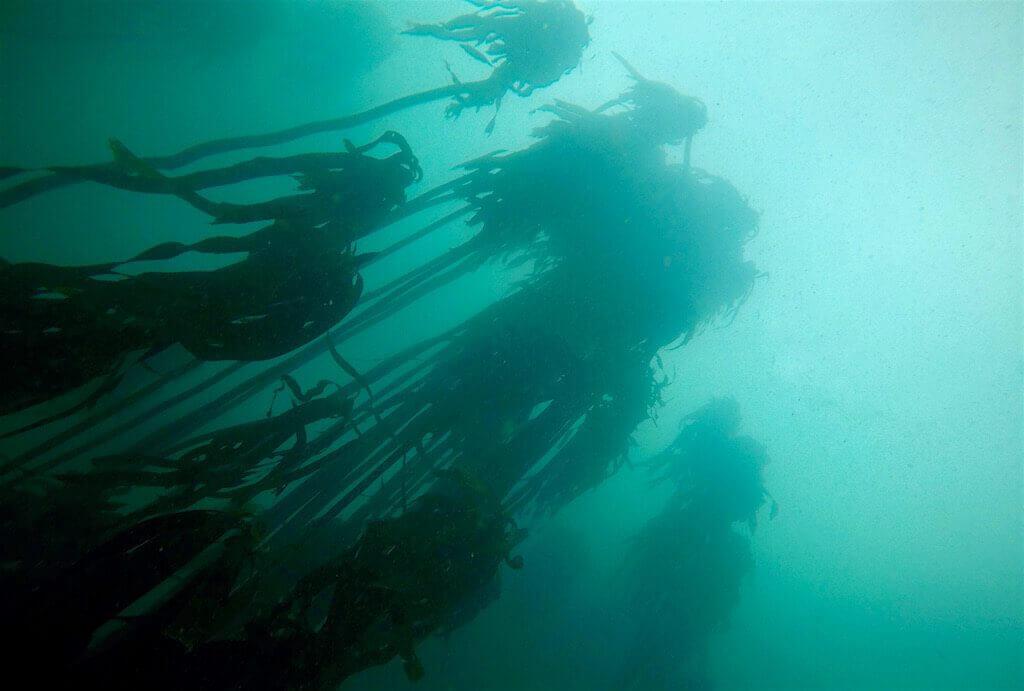 mastroviaggiatore-sudafrica-kelp