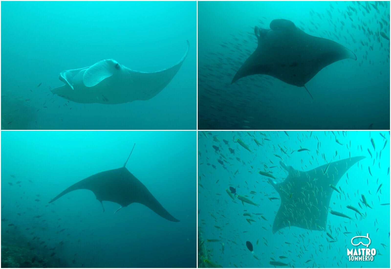 mastro-sommerso-dharavandhoo-maldive-manta-inVolo-ty-2