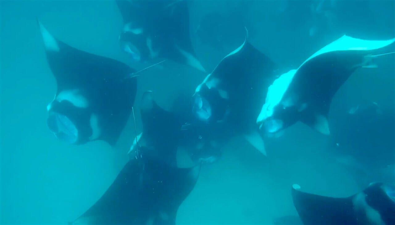 mastrosommerso-hanifaru-maldive-mante