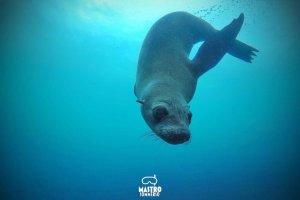 mastrosommerso-w-la-foca