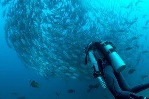 mastrosommerso-al-viaggiator-subacqueo