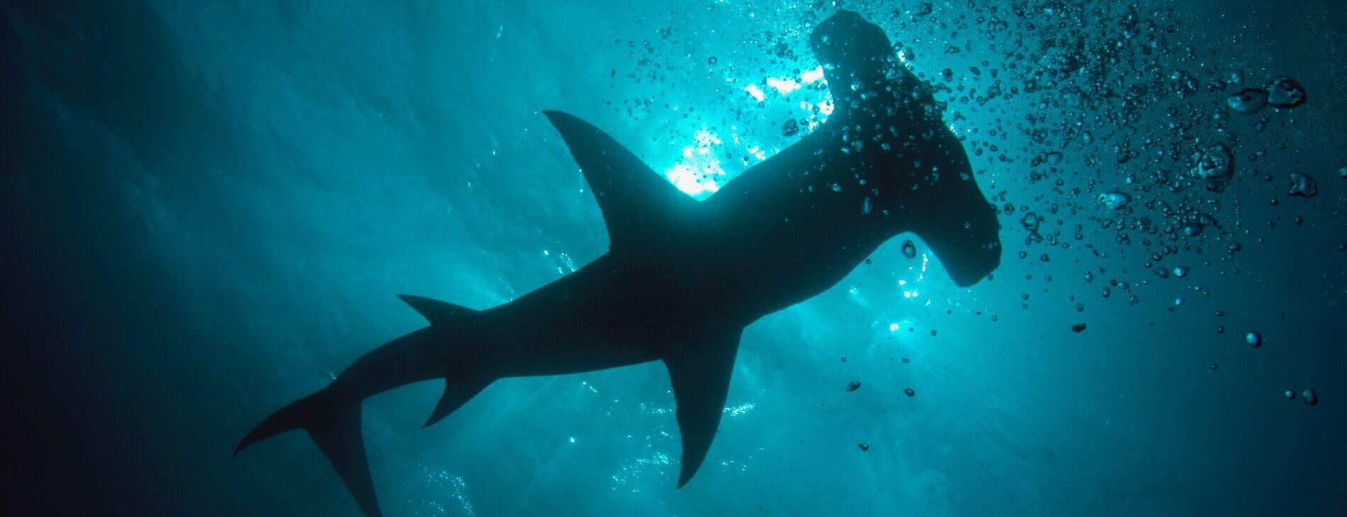 mastrosommerso-squalo-martello